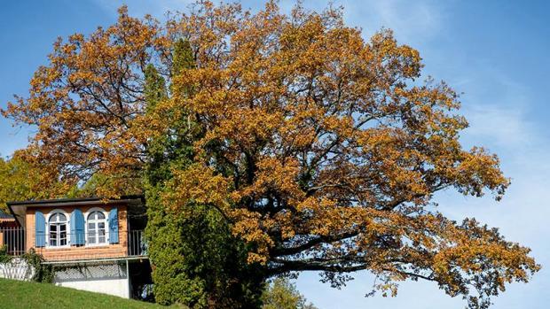 Connexion avec la nature : un arbre dans leur vie