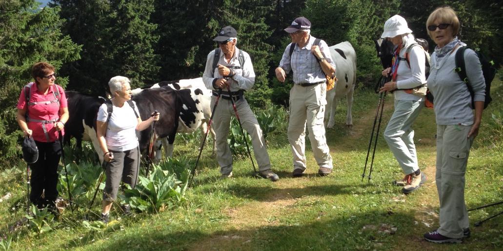 Image de Du Marchairuz au Mont Tendre