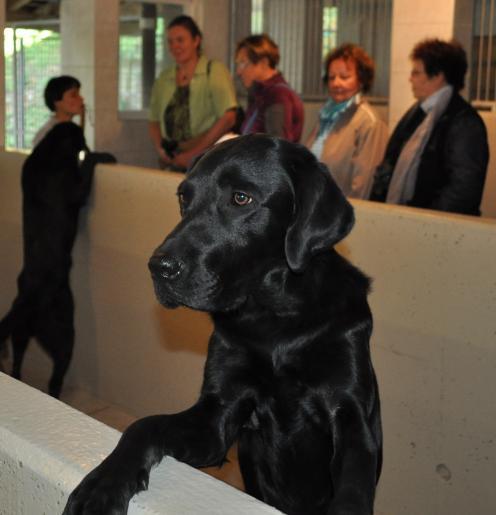 Image de Visite de la Fondation romande pour chiens guides d'aveugles