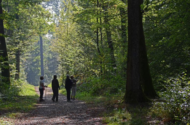 Image de Balade automnale dans le Bois-Genoud, Romanel/Lausanne