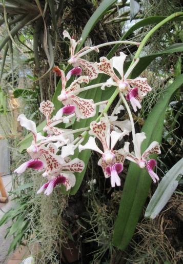Image de Maison tropicale