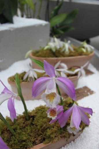 Image de visite guidée exposition Orchidée Berne (jeudi)