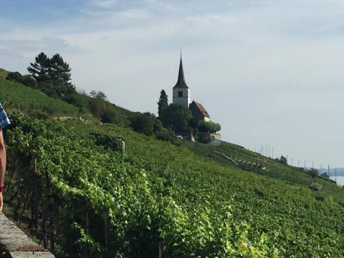 Image de Balade dans le vignoble.