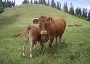 Image de l'activite Au coeur des Alpages de la Veveyse, Les Paccots