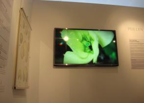 Image de l'activite Musée et jardins Botaniques de Lausanne - Reporte à mercredi 20 aout
