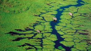 Yann Arthus-Bertrand : J'ai photographié la terre vue du ciel