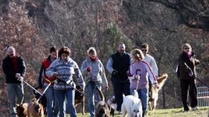 Cani-marche : en bonne santé avec votre chien