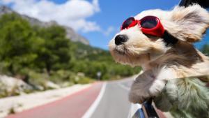 Embarquez vos animaux de compagnie avec vous cet été !