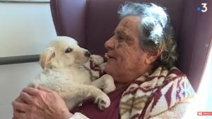 LE DEBAT: Faut-il accepter les animaux  de compagnie dans un EMS?