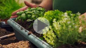 Réaliser une jardinière ou planter des fleurs colorées grâce aux conseils d'un pro!
