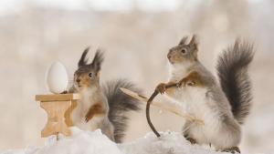 Les étonnants écureuils de Pâques de Gert Weggen