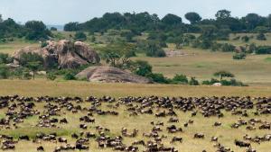 grande migration du Serengeti