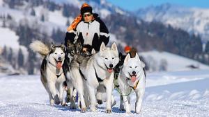 Activités : il n'y a pas que le ski dans la vie!
