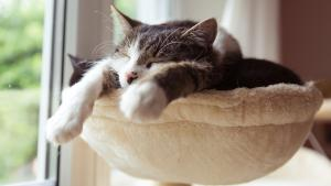 Gardez vos chats domestiques enfermés
