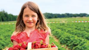 Les fraises débarquent, miam!