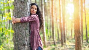 Connectez-vous à un arbre !
