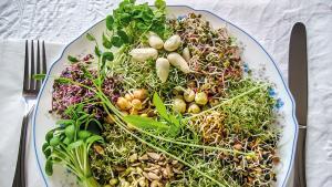 Les graines germées : des petites bombes nutritionnelles ?