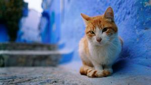 Mon chat peut-il être mon légataire?