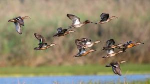 Migration : Et si vous alliez observer les oiseaux?