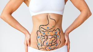Recherche : les superpouvoirs de l'intestin