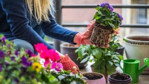 Appartement ou maison, il est temps de créer votre jardin!