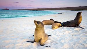 Les Galápagos, eldorado  des passionnés de nature