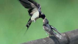 Quand les oiseaux s'envolent!