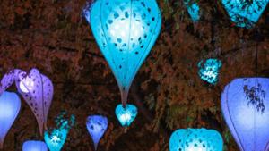 Festival des lumières 2019