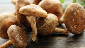 Champignons: attention aux shiitake