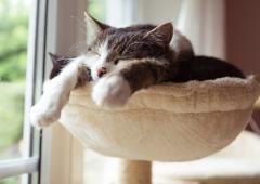 Santé : gardez vos chats domestiques à l'intérieur !