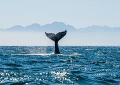 Un spectacle marin hors du commun