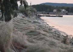 Une toile d'araignée de 300 mètres de long !