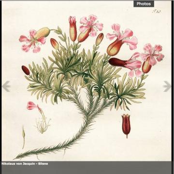 Image de Immersion botanique