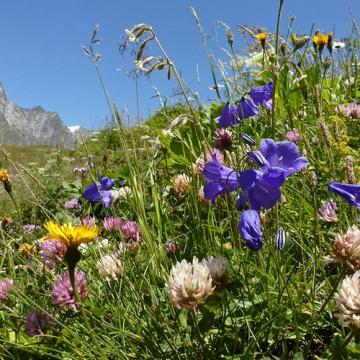 Image de Au coeur des Alpages de la Veveyse, Les Paccots