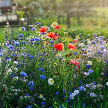 Image de A la découverte de la flore vaudoise - excursion guidée