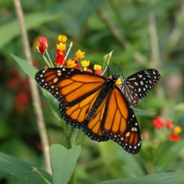 Image de Papiliorama