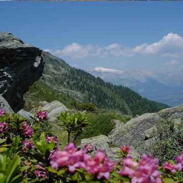Image de De l'Alpage de Mandelon à Evolène, reporté au jeudi 31 juillet