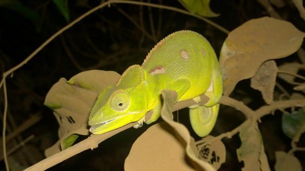 Image de Madagascar - REPORTE