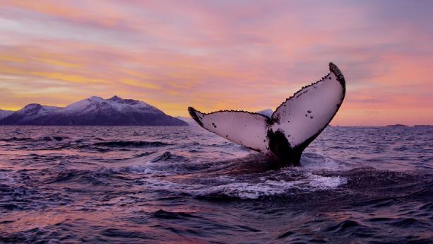 Image de La magie des îles Lofoten