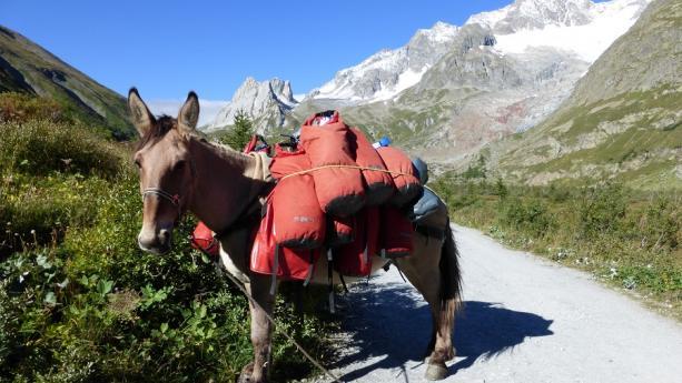 Image de Tour du Mont-Blanc - Randonnée muletière