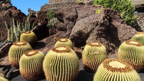 Image de Eternel printemps dans l'Archipel des Canaries