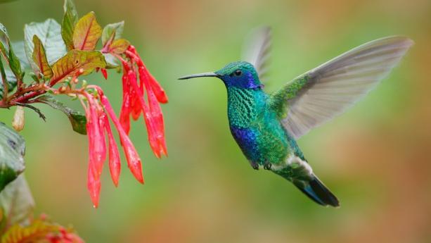 Image de Equateur & Galapagos