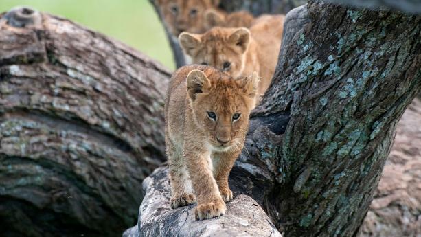 Image de Tanzanie - Approchez la grande migration du Serengeti