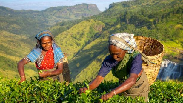 Image de Sri Lanka - Trésors au coeur de l'océan indien