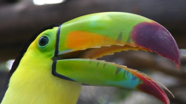 Image de Costa Rica